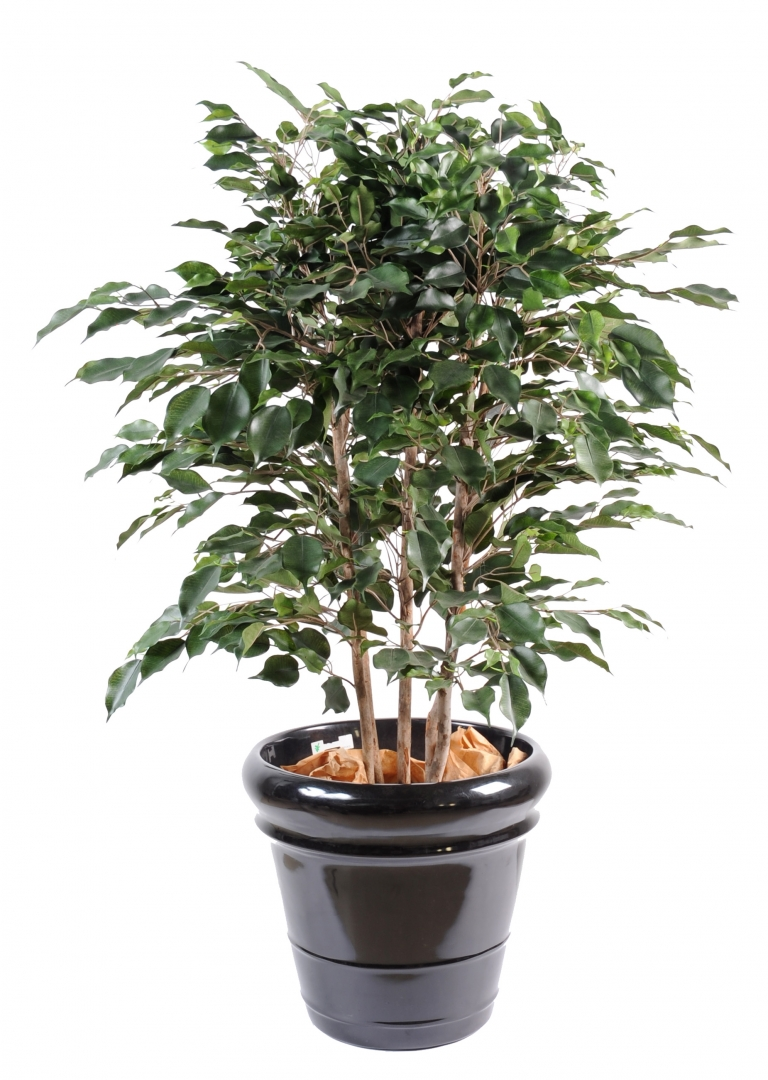 Plante artificielle for Plante verte haute